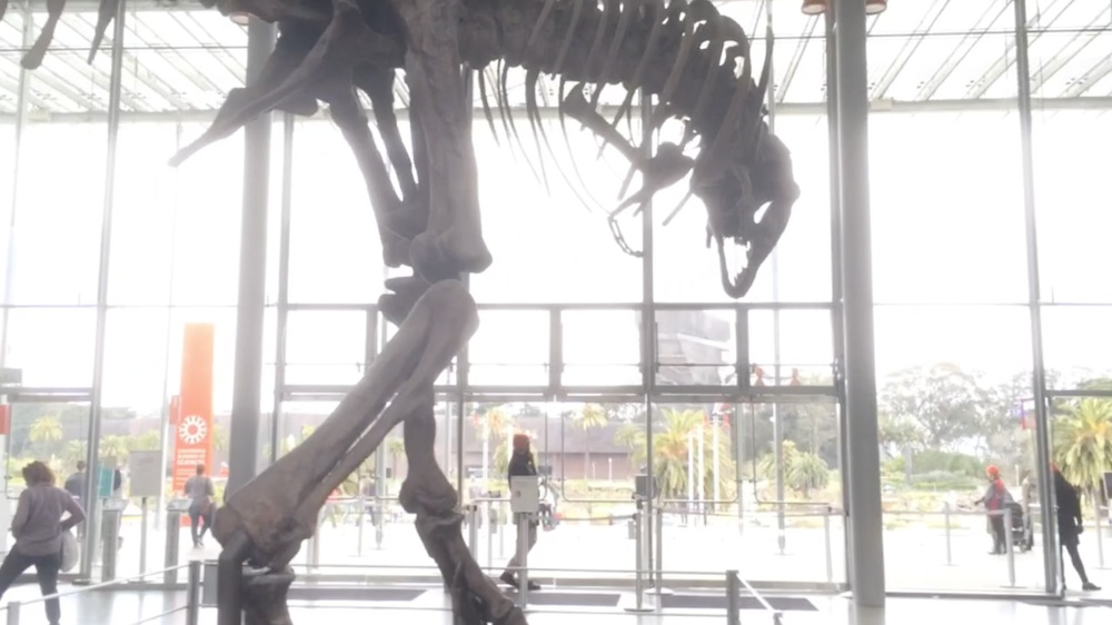 Hyperlapse t-rex 1000