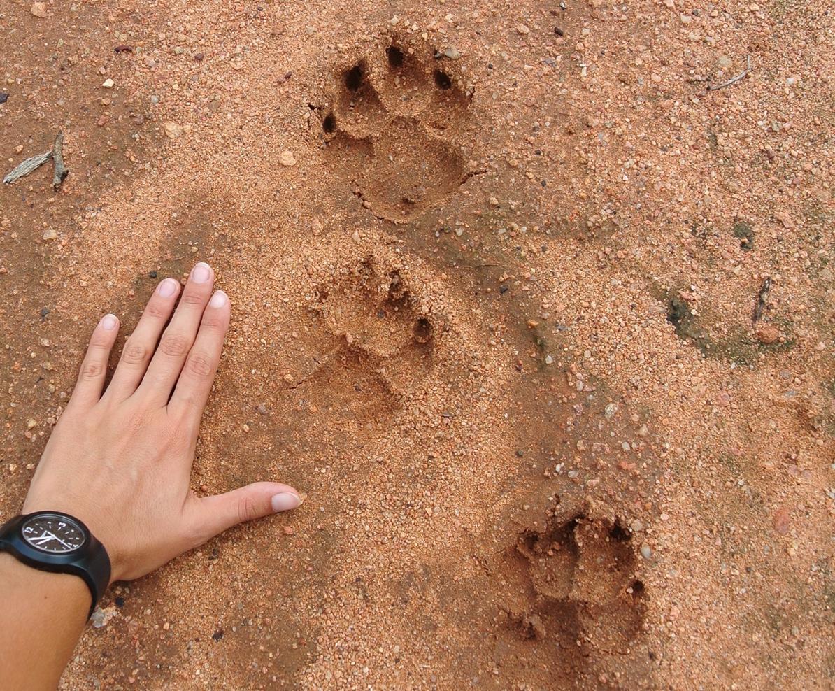 Animal-tracks.1200
