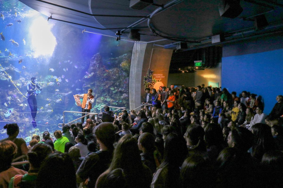 Dive show-1200