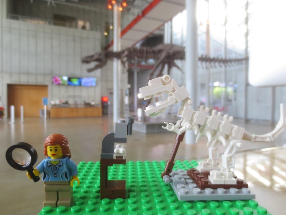 Paleotologist w t rex